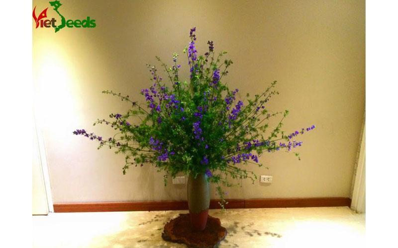 cách chăm sóc hoa violet