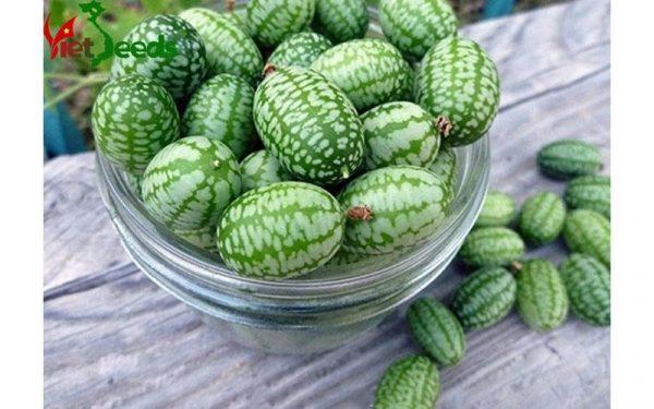 mua hạt giống dưa hấu mini