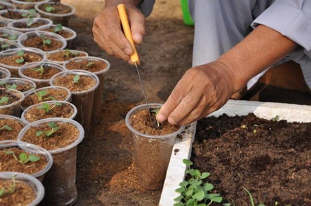 trồng hạt giống bằng xơ dừa