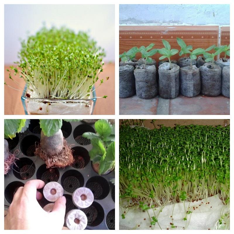 Cách trồng hạt giống bằng xơ dừa